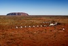 Longitude 131, Ayers Rock, Northern Territory